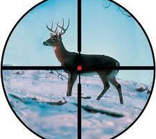 散弾銃 ライフル銃 スコープ サイト合わせ